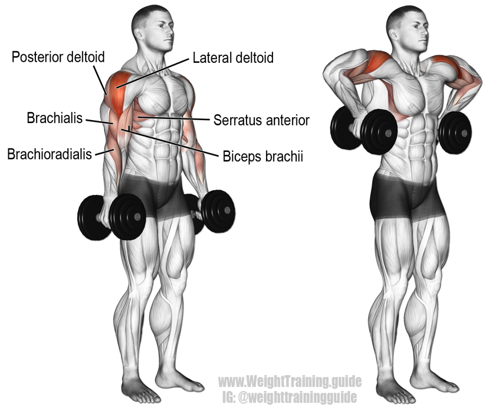 Dumbbell-armpit-row-2.png